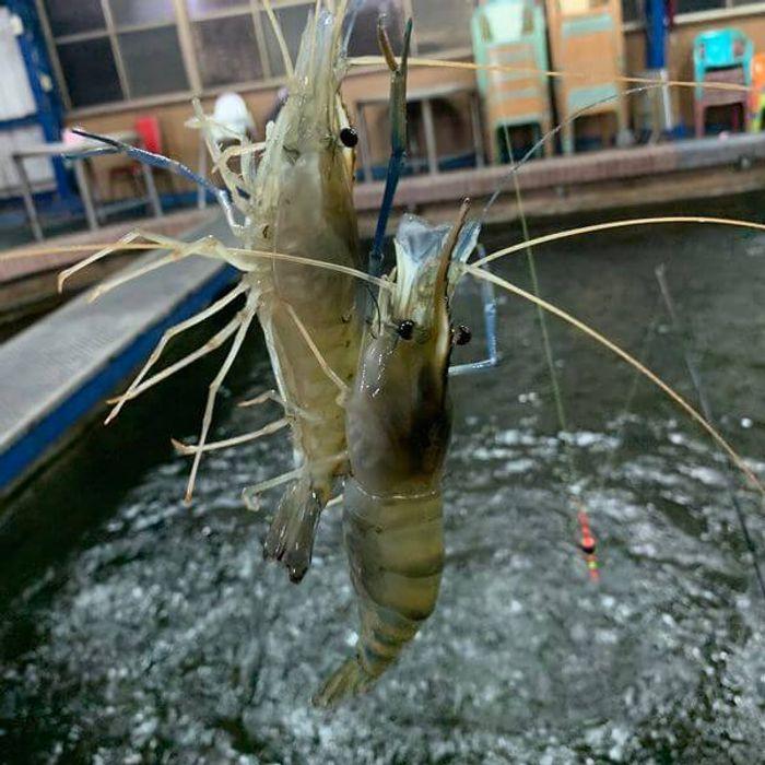 新竹竹北新泰和釣蝦場。新竹竹北釣蝦推薦。雙鉤
