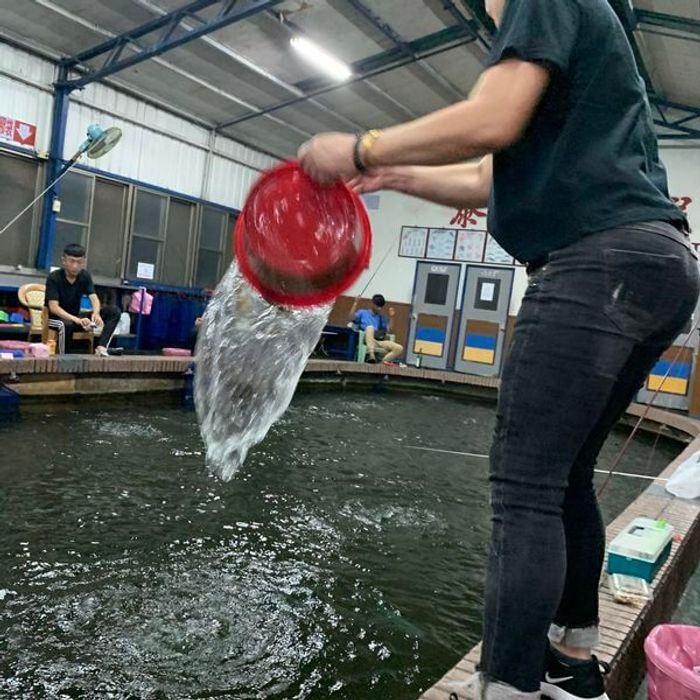 新竹竹北新泰和釣蝦場。新竹竹北釣蝦推薦。放蝦