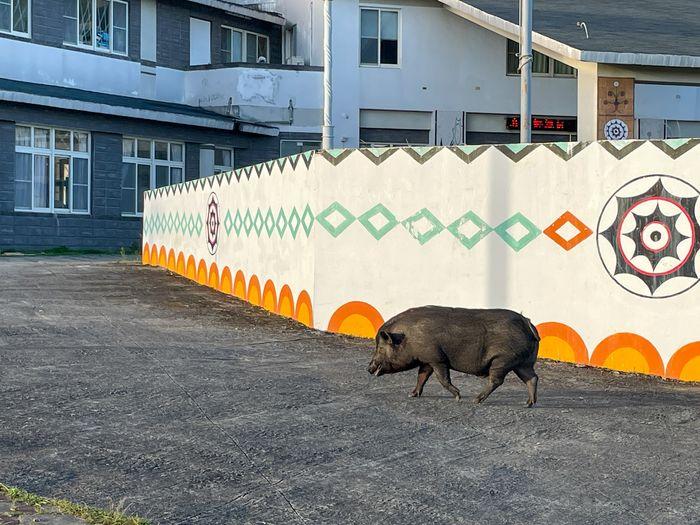 蘭嶼巴漾民宿/蘭嶼無敵海景房住宿推薦2021/靠近碼頭/電話地址/環島拍照景點/野豬