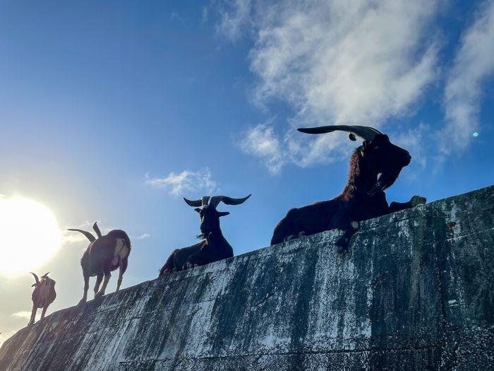 蘭嶼巴漾民宿/蘭嶼無敵海景房住宿推薦2021/靠近碼頭/電話地址/環島拍照景點/山羊